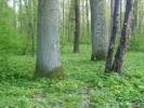Dzień Drzewa